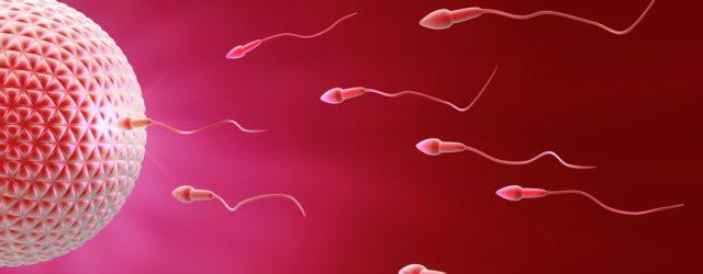 FIV par dons d'ovocytes